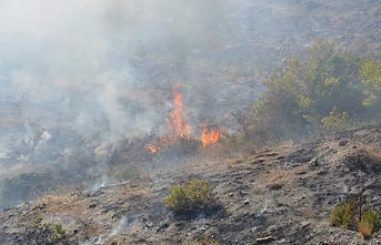 Tokat'ta 3 hektar alan yandı