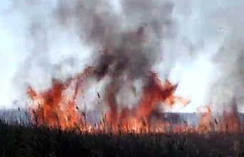 Mersin'deki Göksu Deltası'nda yangın çıktı