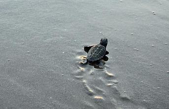 Mersin'de deniz kaplumbağaları için temizleme çalışması