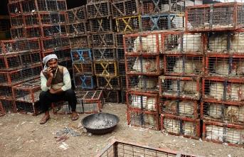 Cammu Keşmir'de kuş gribi alarmı