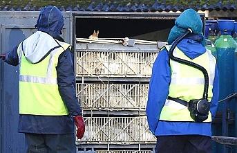 Rusya'da korkutan kuş gribi gelişmesi