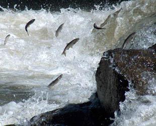 Van'da Uçan Balıklar Festivali