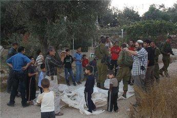 Yahudi yerleşimciler Filistinlilerin zeytinlerini çalıyor