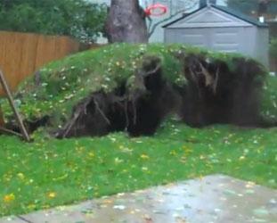 Kasırga dev ağaçları yerinden söktü-VİDEO
