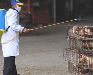 Çin'de yeni bir kuş gribi
