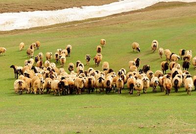 Çobanlar devlet memuru oluyor