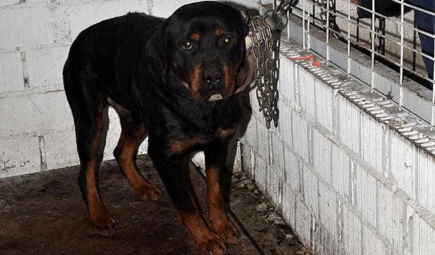 Köpeğini sahipsiz bırakan kişiye ilginç ceza