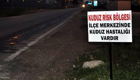 Aydın'da kuduz karantinası