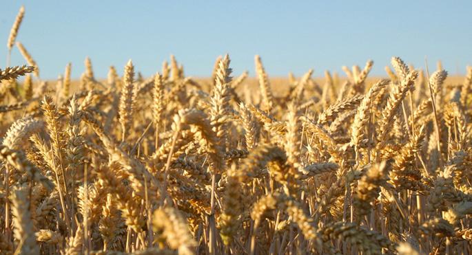 Türk-Rus tahıl ticareti krizden etkilenmedi