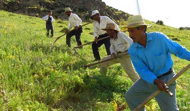 Çiftçiye yağlı tohum desteği 27 Mayıs'ta