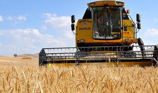 Buğdayda stoklar 200 milyon tona gidiyor