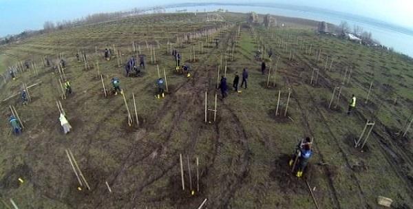 İstanbul'a 115 bin yeni ağaç dikiliyor