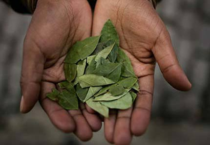 Papa Bolivya'dan koka yaprağı istedi