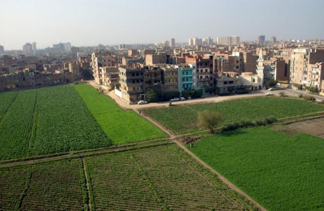 BM uyardı:Şehirlerde gıda yetiştirme alanları şart