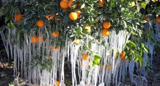 Ege Bölgesi için zirai don uyarısı