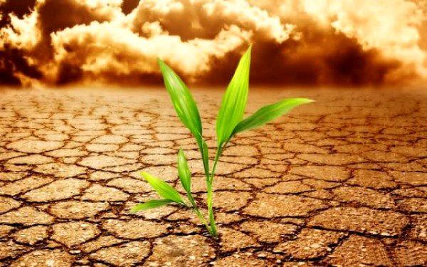 Bir insana yetecek toprak
