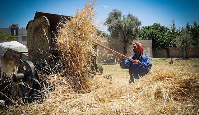 Suriye'de bombalar altında hasat