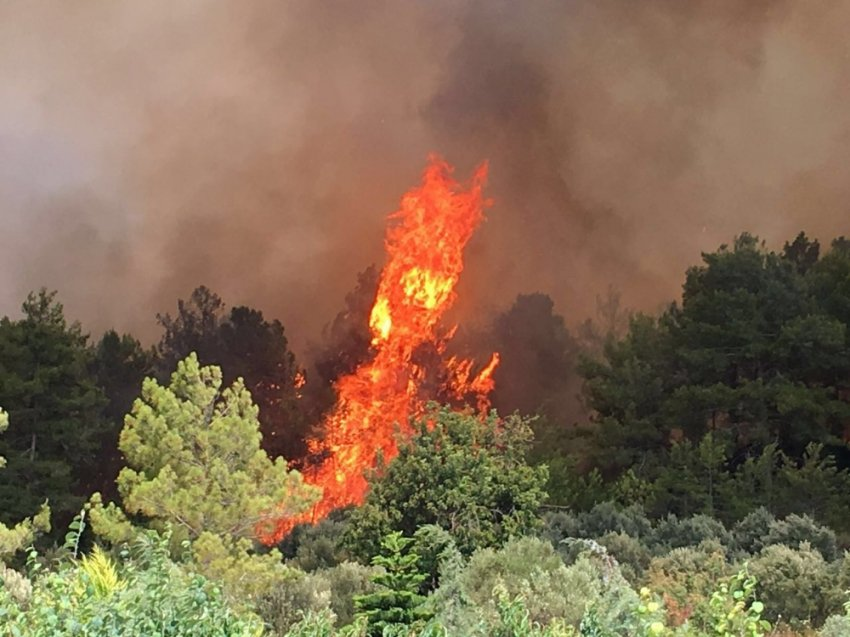 Alara Vadisi'nde yangın çıktı