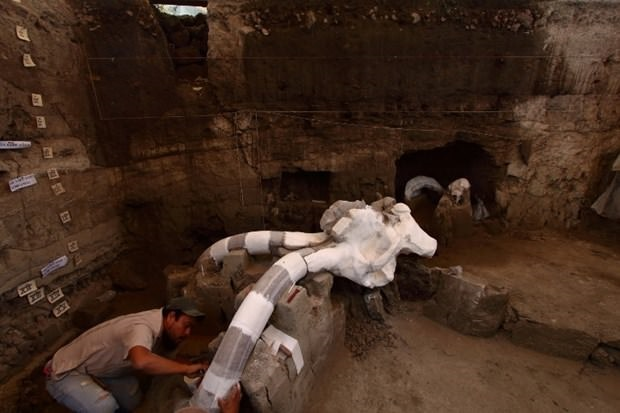 14 bin yıllık mamut fosili bulundu