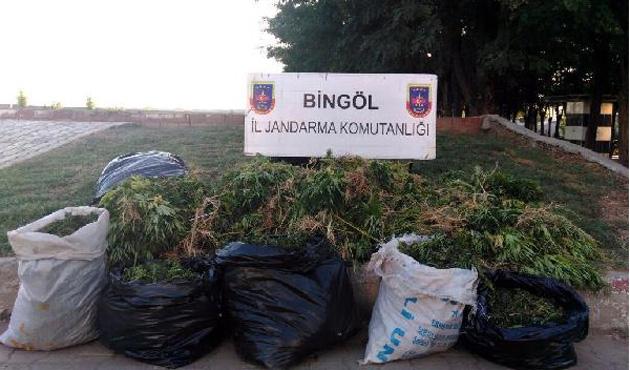 Bingöl'de esrar operasyonu