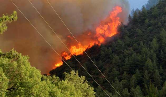 Antalya'da 5 noktada orman yangını