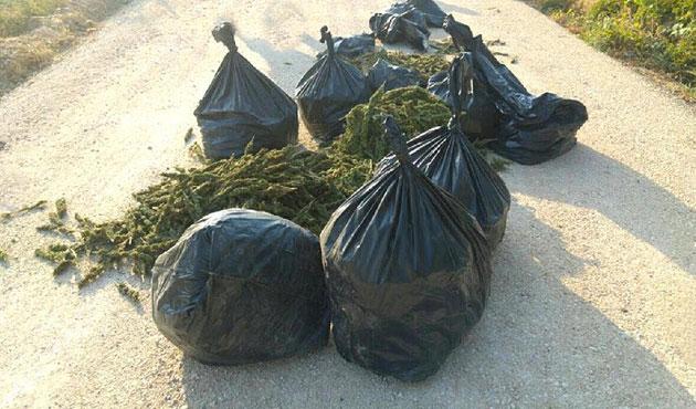 Arnavutluk'ta uyuşturucu operasyonu