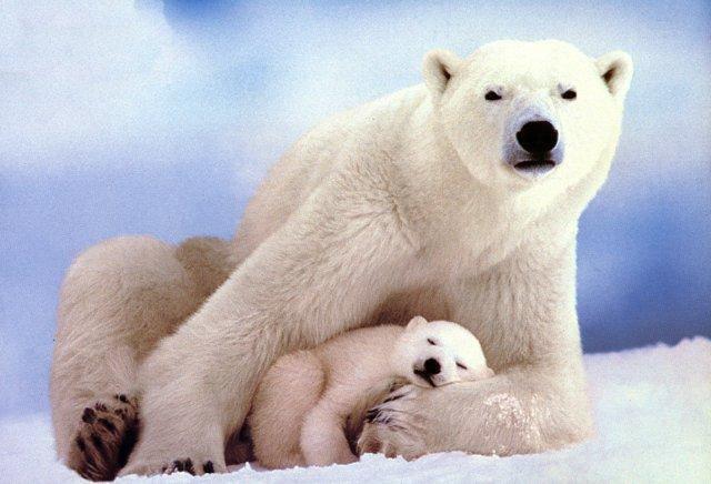 Hayvan neslini insan tüketiyor