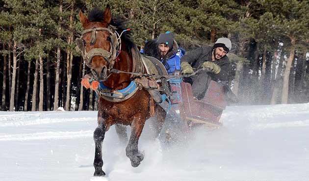 Sarıkamış'ta atlı kızaklar yeni sezona hazır | FOTO
