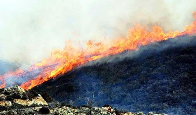 Yangın tarım arazilerine sıçradı