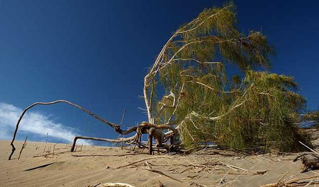 Çöl olan göl ya da Aral gölü faciası-2