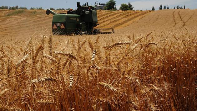 Buğdaydaki 'tarım ilacı ve kanser' tartışmalarına açıklama