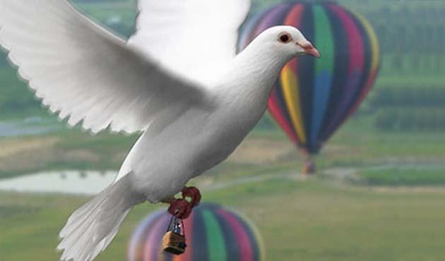 Uruguay ordusu posta güvercini yetiştiriyor