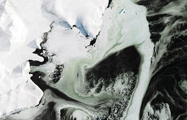 Antarktika'daki 'yeşil buzul'un gizemi çözüldü