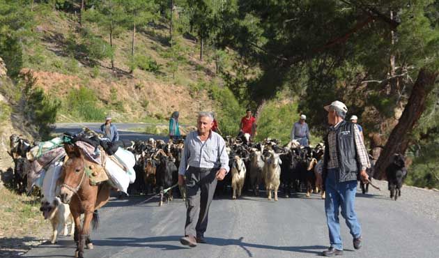 Antalya'da Yörüklerin yayla göçü başladı