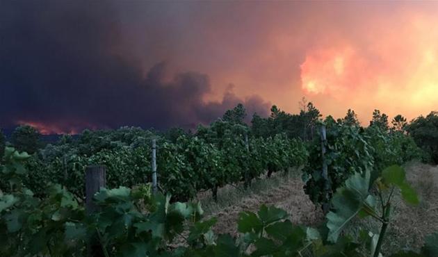 Portekiz'de orman yangını: 57 ölü