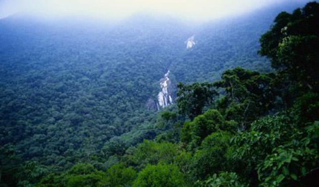 Norveç'ten Brezilya'ya orman uyarısı