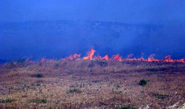 Ayvalık'ta makilik alanda yangın