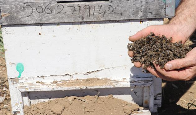 Manisa'da 1 milyon arı telef oldu