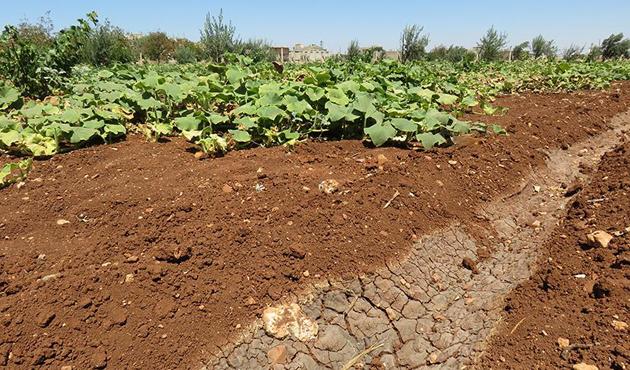 Esed rejiminin kuşatması Humuslu çiftçileri de vurdu