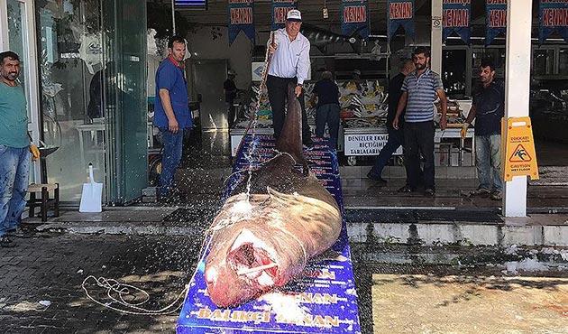 Marmara'da 4 metre boyunda, 1,2 tonluk köpek balığı yakalandı