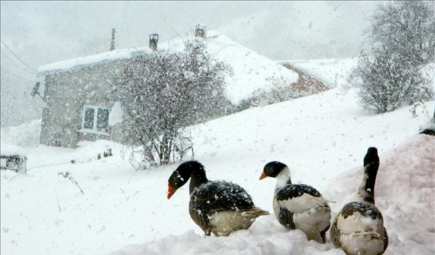 Ardahan'da kar yağışı ve sis yol kapattı