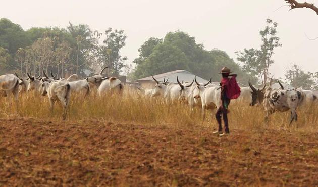 Nijerya'da çoban ve çiftçi çatışmalarının nedeni dini değil