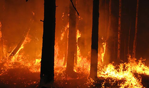 Etiyopya'da orman yangını söndürülemiyor