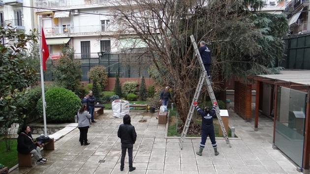 Selanik'teki asırlık nar ağacının bakımı yapıldı