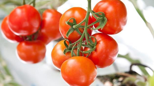 Rusya'dan 5 Türk şirketine daha domates ithalatı izni