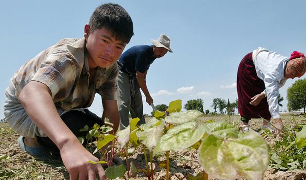 Özbekistan'da 'çalışmaya zorlamak' OHAL sayılacak