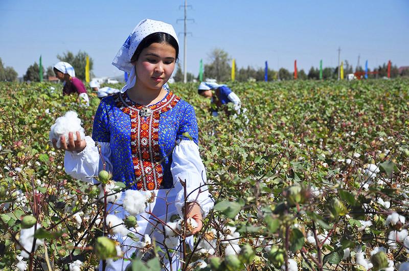 ABD'den Türkmen pamuğuna yasak