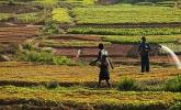 Afrika'nın tarım potansiyeli ve küresel rekabet...