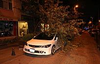 İstanbul'da rüzgar ağaçları devirdi, deniz ulaşımı felç