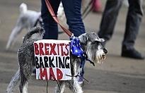 İngiltere'de Brexit isyanına köpekler de katıldı